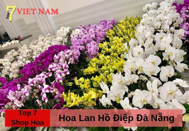 Top 7 Shop Hoa Lan Hồ Điệp Đà Nẵng