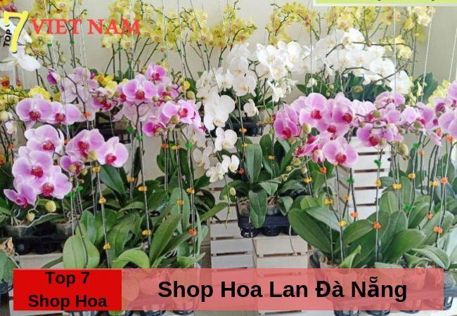 Top 7 Shop Hoa Lan Đà Nẵng
