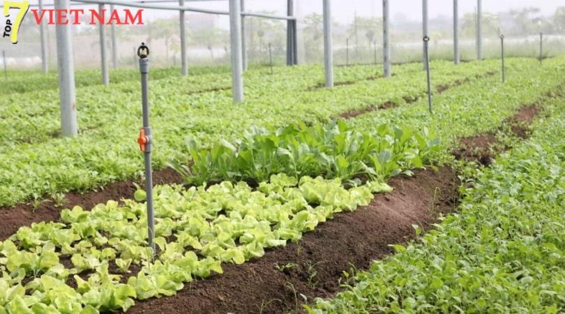 An Phú Farm